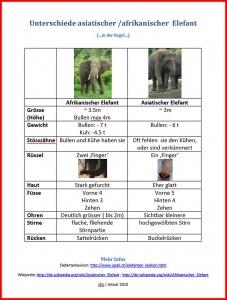 Eelefantenunterschied1