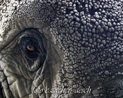 Elefanten_01