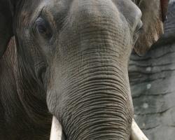 Elefanten_43