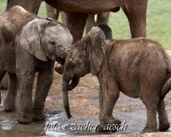 Elefanten_54