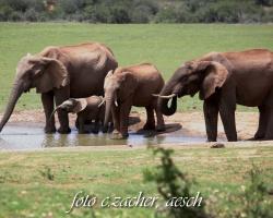 Gorah_Elefanten01_0008