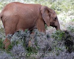 Gorah_Elefanten01_0028