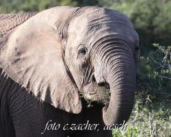Gorah_Elefanten03_0023