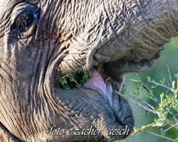 Gorah_Elefanten03_0027b