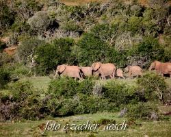 Gorah_Elefanten03_0037