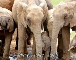 Gorah_Elefanten05_0080