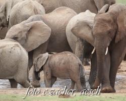 Gorah_Elefanten05_0089
