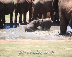 Gorah_Elefanten08_0084