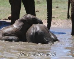 Gorah_Elefanten08_0148