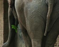 berlin-zoo-elefanten024