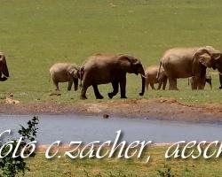 xGorah_Elefanten01