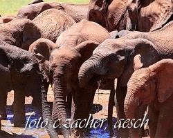 xGorah_Elefanten08_0179